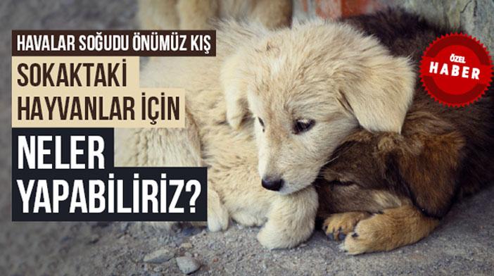 ÖNÜMÜZ KIŞ, SOKAK HAYVANLARINI UNUTMAYIN!..