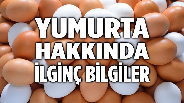 YUMURTA HAKKINDA İLGİNÇ BİLGİLER!..