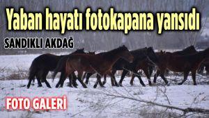 AKDAĞ'DA YABAN HAYATI FOTOKAPAN'A YANSIDI