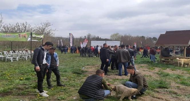 AFYON'DA ÇOBAN KÖPEKLERİ FESTİVALİ YAPILDI