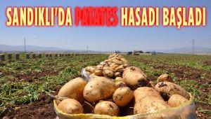 SANDIKLI'DA PATATES HASADI BAŞLADI
