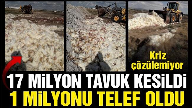 YUMURTA SEKTÖRÜNDE KRİZ DERİNLEŞİYOR!..