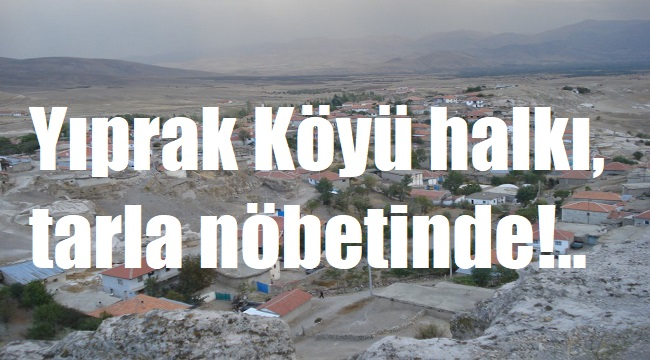 VATANDAŞ, KOMŞU KÖYÜN ÇOBANLARINA KARŞI TARLALARINDA NÖBETTE!..