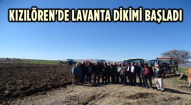 KIZILÖREN'DE LAVANTA DİKİMİ BAŞLADI