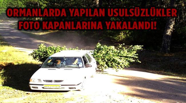 ORMANLARDAKİ USULSÜZLÜKLER FOTO KAPANLARA YAKALANDI