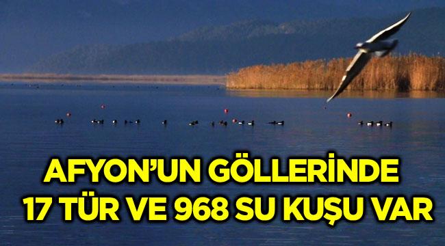 AFYON'UN GÖLLERİNDE 17 TÜR VE 968 SU KUŞU VAR