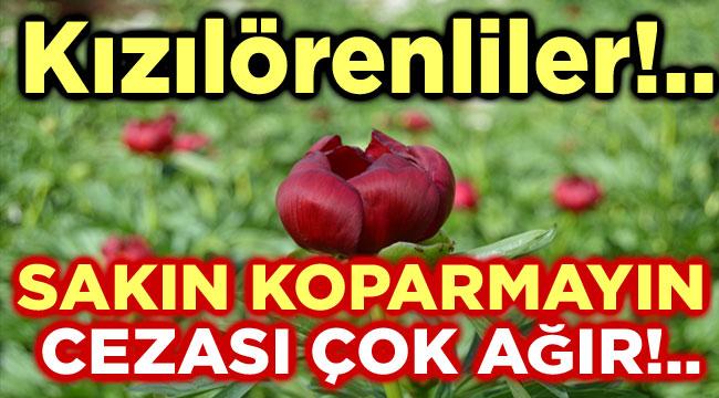 SAKIN HA KOPARMAYIN, CEZASI ÇOK AĞIR!..
