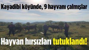 HAYVAN HIRSIZLARI TUTUKLANDI!..