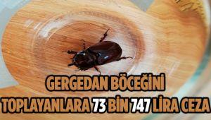 GERGEDAN BÖCEĞİNİ TOPLAYANLARA 73 BİN 747 LİRA CEZA