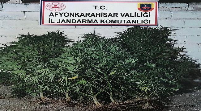 KUBAR ESRAR ÜRETMEK İÇİN KENEVİR EKMİŞ!..