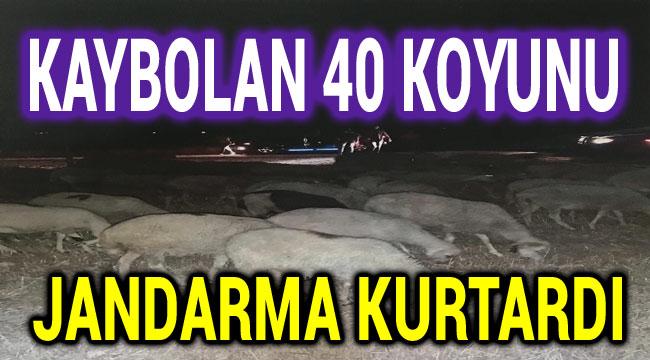 KAYBOLAN 40 KOYUNU JANDARMA KURTARDI