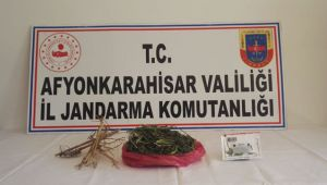 SANDIKLI'DA KENEVİR OPERASYONU
