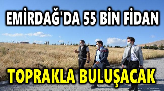 EMİRDAĞ'DA 55 BİN FİDAN TOPRAKLA BULUŞACAK