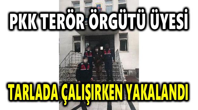 PKK TERÖR ÖRGÜTÜ ÜYESİ TARLADA ÇALIŞIRKEN YAKALANDI