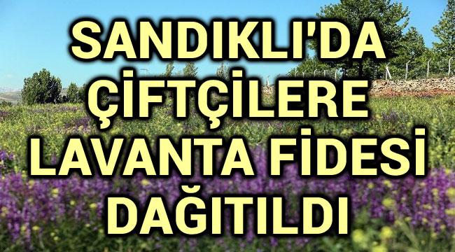 SANDIKLI'DA ÇİFTÇİLERE LAVANTA FİDESİ DAĞITILDI
