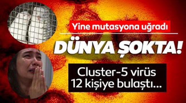 DÜNYA ŞOKTA, CLUSTER-5 VİRÜSÜ 12 KİŞİYE BULAŞTI