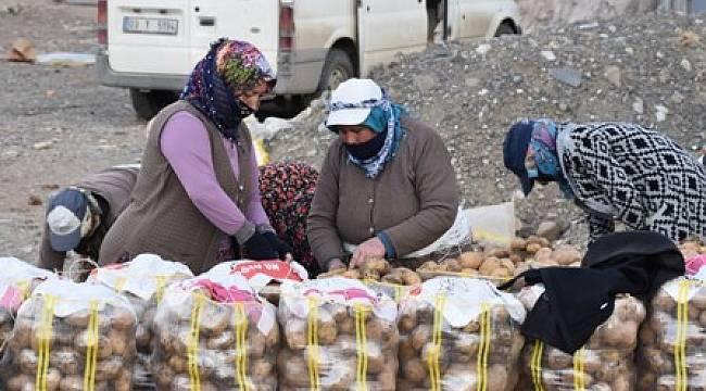 Türkiye'nin patates deposu Sandıklı