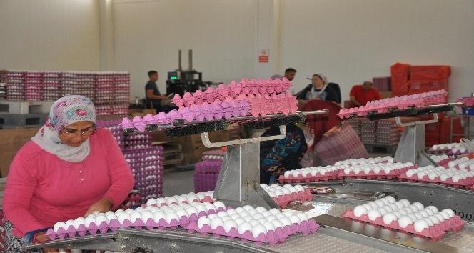 Yumurta fiyatları neden yükseldi?!..