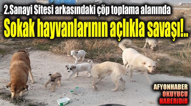 2 Sanayi Sitesi arkasında bulunan çöp toplama alanında hayvanların yaşam savaşı