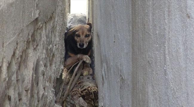 Afyon'da binaların arasına sıkışan köpeği itfaiye kurtardı