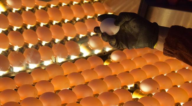 Afyon'dan geçen yıl 32.6 Milyon Dolarlık yumurta ihraç edildi