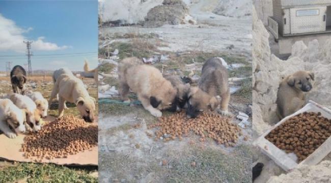 Sokak hayvanlarına yiyecek bırakıldı