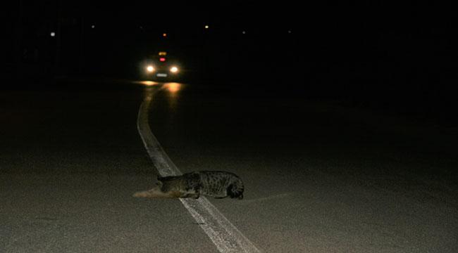 Arkadaşı ölen kediden büyük vefa örneği