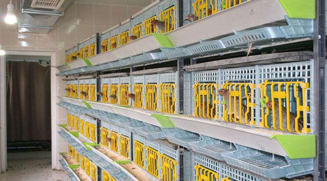 Şuhut Keklik Üretme İstasyonunda bu yıl 9 bin keklik üretimi hedefleniyor