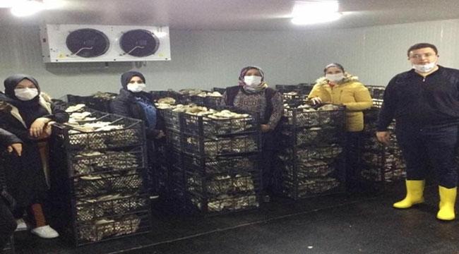 Bayatlı kadınlar, istiridye mantarı üretiyor!..