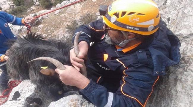 Afyon'da kayalıklarda mahsur kalan keçiyi AFAD ekipleri kurtardı