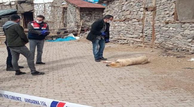 Afyon'da sokak ortasında vurulan köpek otopsiye gönderildi
