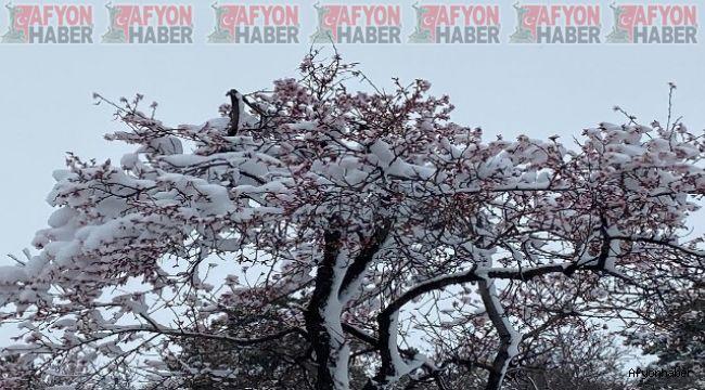Afyon'da yalancı bahara aldanıp çiçek açan ağaçlar kar altında kaldı
