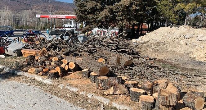 Bolvadin Özburun'da GES yapmak için 100 çam ağacı kesildi