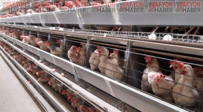 Bu ilçede 6 milyon tavuk, 5 bin insan yaşıyor!..