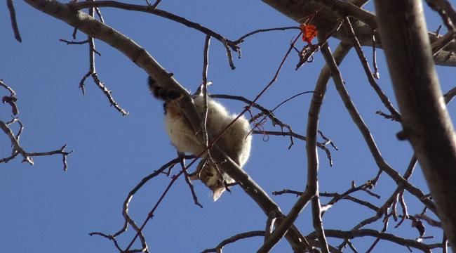 Köpeklerden korkup ağaca çıkan kediyi itfaiye kurtardı