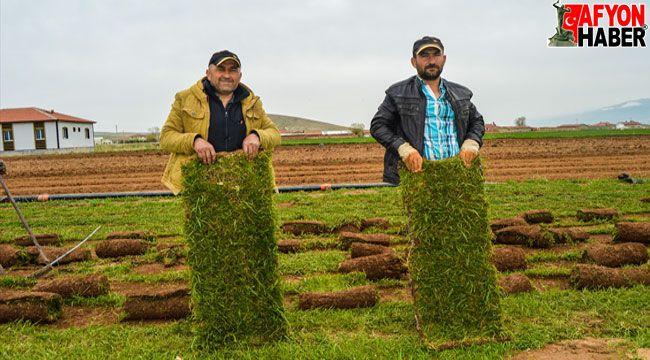 Afyon'da ailece ürettikleri rulo çimleri belediyelere satıyorlar