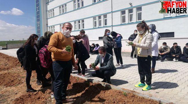 Afyon'da öğrenciler okul bahçesine kekik fidanı dikti