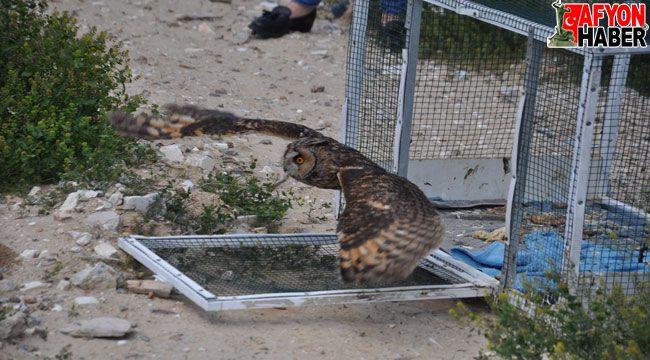 Afyon'da tedavileri tamamlanan iki yırtıcı kuş ile kır tavşanı doğaya salındı