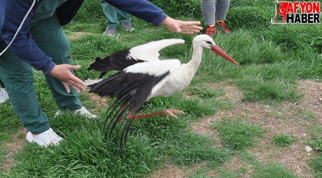 AKÜ'de tedavisi tamamlanan pelikan ve leylek doğaya bırakıldı