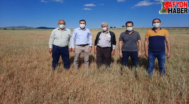 Afyon'da kuraklık çiftçileri vurdu