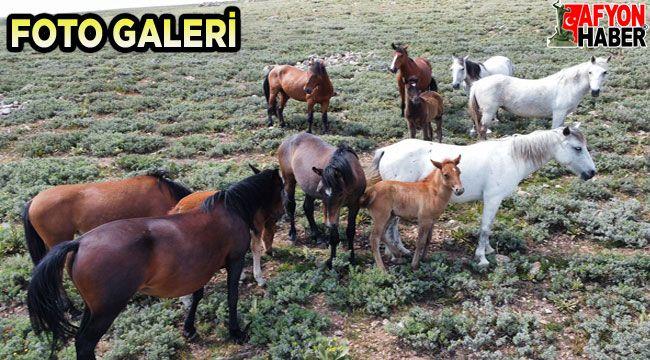 Afyon'da yılkı atları havadan görüntülendi