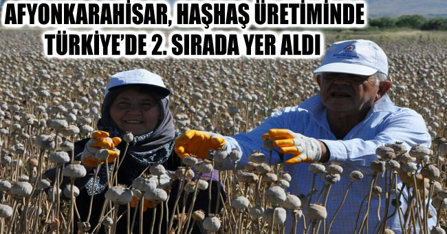 AFYONKARAHİSAR, HAŞHAŞ ÜRETİMİNDE TÜRKİYE'DE 2. SIRADA YER ALDI