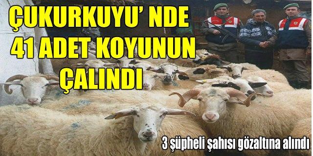 ÇUKURKUYU' NDE 41 ADET KOYUNUN ÇALINDI