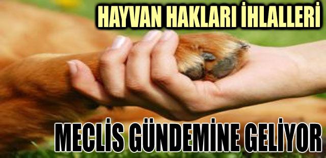 HAYVAN HAKLARI İHLALLERİ MECLİS GÜNDEMİNE GELİYOR
