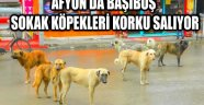 AFYON'DA BAŞIBOŞ SOKAK KÖPEKLERİ KORKU SALIYOR