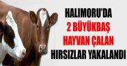 HALIMORU' DA 2 BÜYÜKBAŞ HAYVAN ÇALAN HIRSIZLAR YAKALANDI