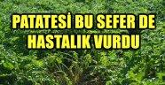 PATATESİ BU SEFER DE HASTALIK VURDU