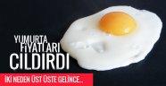 YUMURTA FİYATLARI NEDEN ÇILDIRDI?..